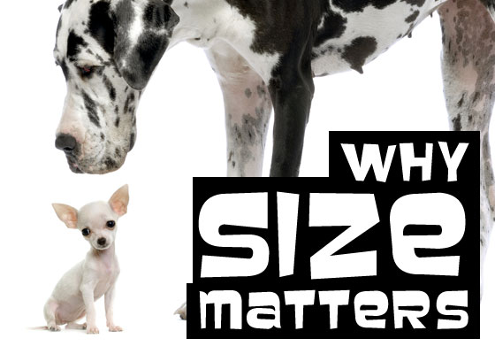 Why Size Matters - Content Marketing Seminar