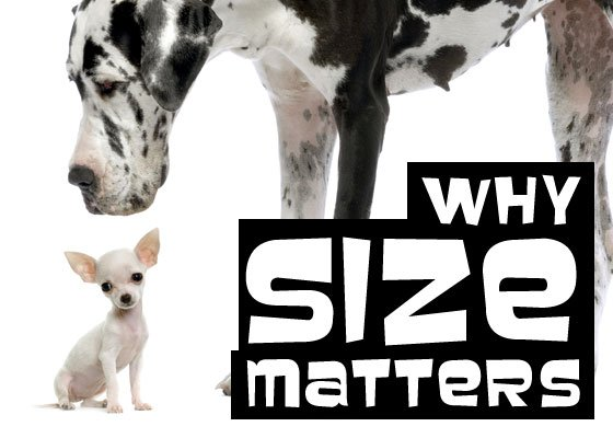 http://blog.tomorrow-people.com/Portals/103687/images/why-size-matters.jpg